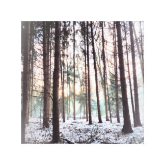 Soft Hazy winter Forest Sunset Canvas Print