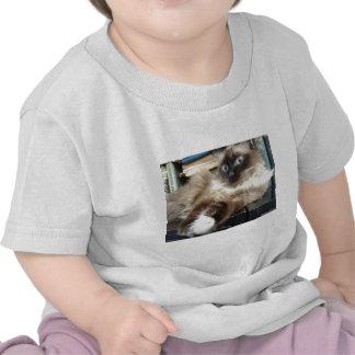 soft kitty warm shirt