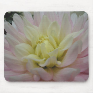 Soft Pink and Yellow Dahlia Mouse Pad