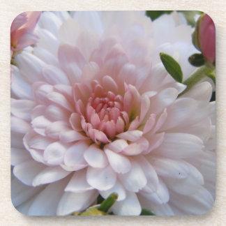 Soft Pink Chrysanthemum Beverage Coaster