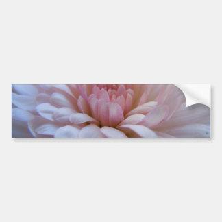 Soft Pink Chrysanthemum Car Bumper Sticker