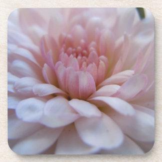 Soft Pink Chrysanthemum Coaster