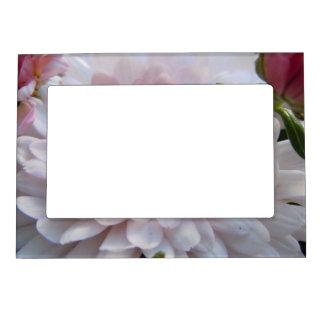 Soft Pink Chrysanthemum Frame Magnet