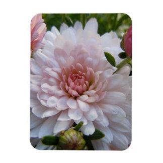 Soft Pink Chrysanthemum Rectangular Magnet