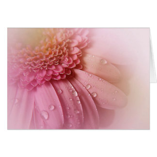 Soft Pink Gerbera With Water Bubbles Card