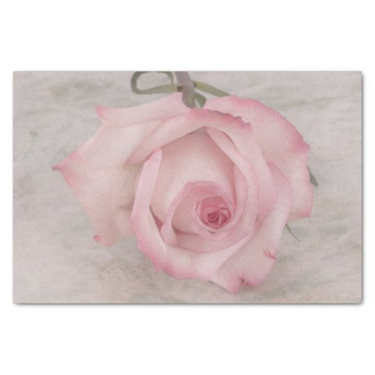 Soft Pink Rose Flower Macro Tissue Paper