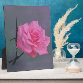 Soft Pink Rose Flower Plaque
