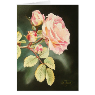 Soft Pink Rose Greeting Card