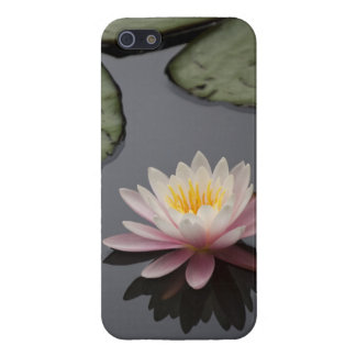 Soft Pink Waterlily Flower iPhone 5/5S Covers
