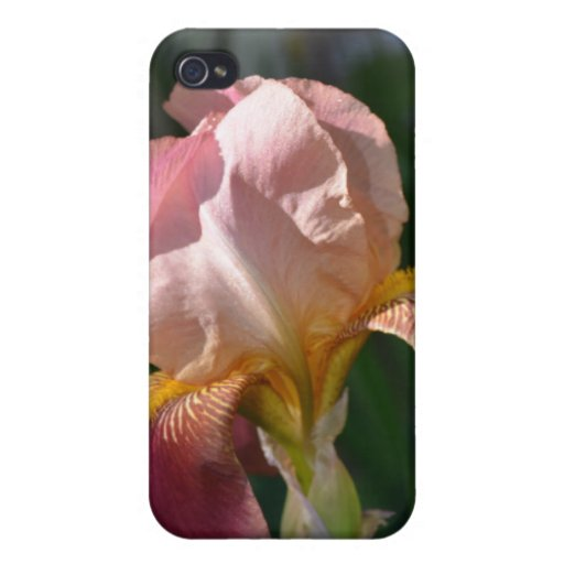 Soft Shades of Rose iPhone 4 Cases