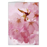 Soft Vintage Pink Cherry Blossoms Stationery Note Card