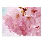 Soft Vintage Pink Cherry Blossoms Postcard
