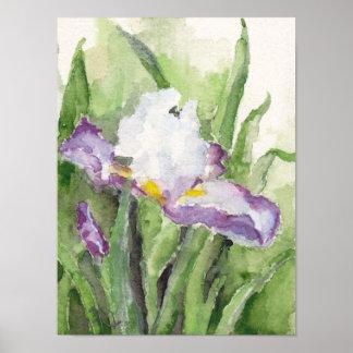 Soft Watercolor Iris Poster