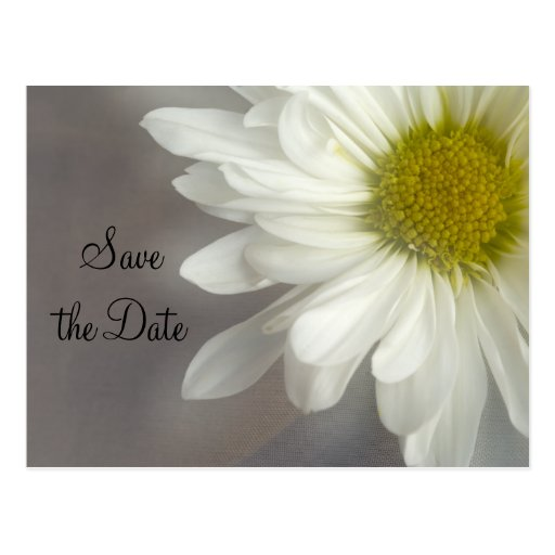 Soft White Daisy on Grey Wedding Save the Date Postcard
