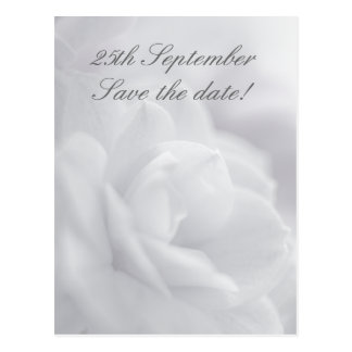 Soft white petals ... Save the date! Postcard