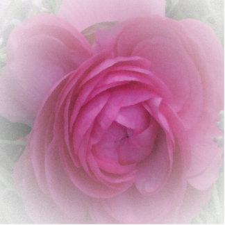 Softly Pink... Photo Sculpture Badge