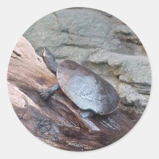 Softshell River Turtle Sticker