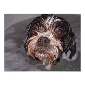 Soggy Doggy Poster