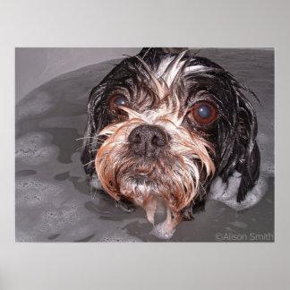 Soggy Doggy Print