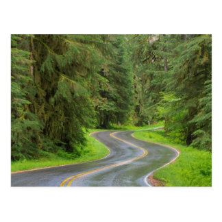 Sol Duc River Road through forest Postcard