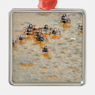 SOLDIER CRABS ON BEACH QUEENSLAND AUSTRALIA CHRISTMAS ORNAMENT