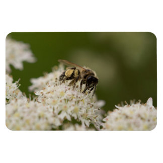 Solitary Bee Magnet