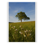 Solitary oak tree with spring wildflowers poster