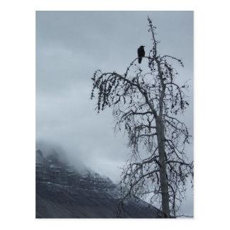 Solitary Raven Postcard