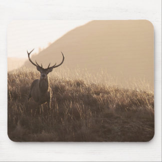 Solitary Red Stag Mousepad