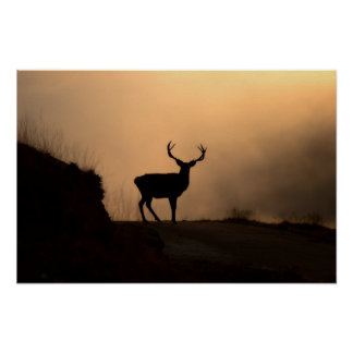 Solitary Red Stag Poster/Print Poster