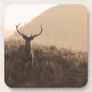 Solitary Red Stag Set of Six Coasters