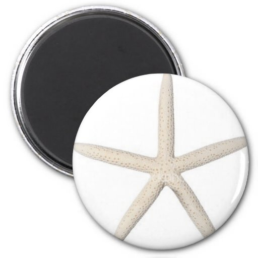 Solitary Starfish Magnets