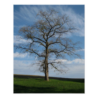 Solitary Tree On The Hill Poster