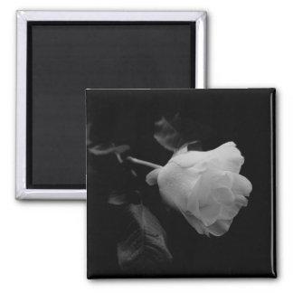 Solitary White Long Stem Rose Magnets
