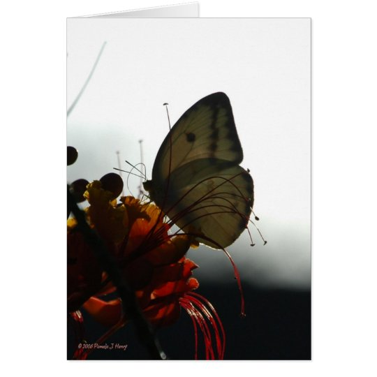 SOLITUDE 5 CARD