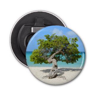 Solo Divi Divi Tree in Aruba