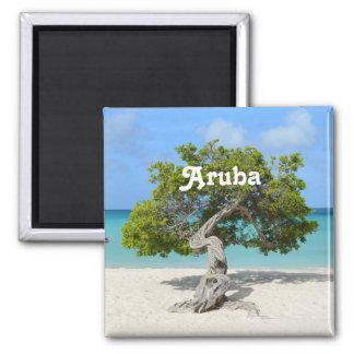 Solo Divi Divi Tree in Aruba Magnet
