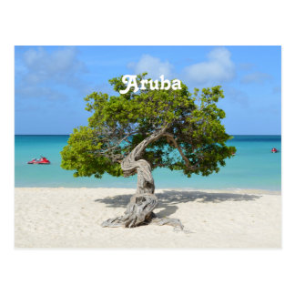 Solo Divi Divi Tree in Aruba Postcard