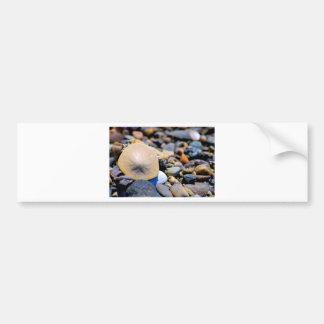 Solo Sand Dollar Bumper Sticker