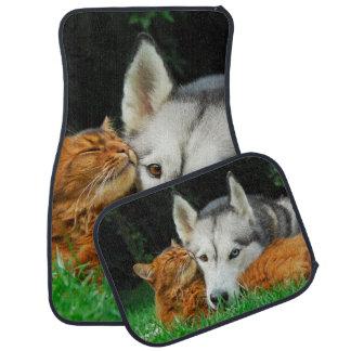 Somali cat - Siberian Husky cute friends huddle / Car Mat