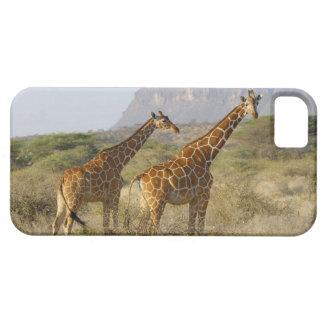 Somali Giraffe, Reticulated Giraffe, Giraffa iPhone 5 Cover
