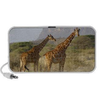 Somali Giraffe, Reticulated Giraffe, Giraffa Laptop Speakers
