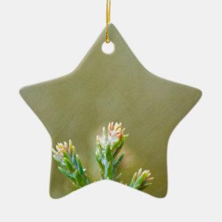 Something green ceramic star decoration