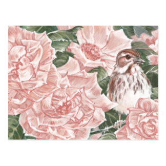 Song Sparrow and Pink Roses Flower Painting Post Cards