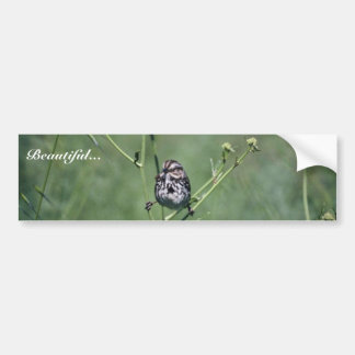 Song Sparrow Bumper Sticker