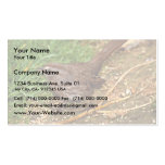 Song Sparrow Business Cards