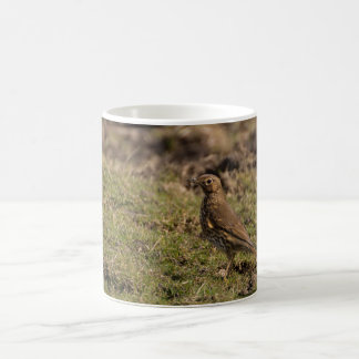 Song Thrush Coffee Mug