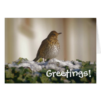 Song Thrush Greetings Card