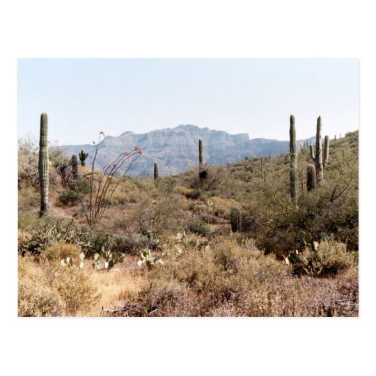 Sonoran Desert Arizona Postcard