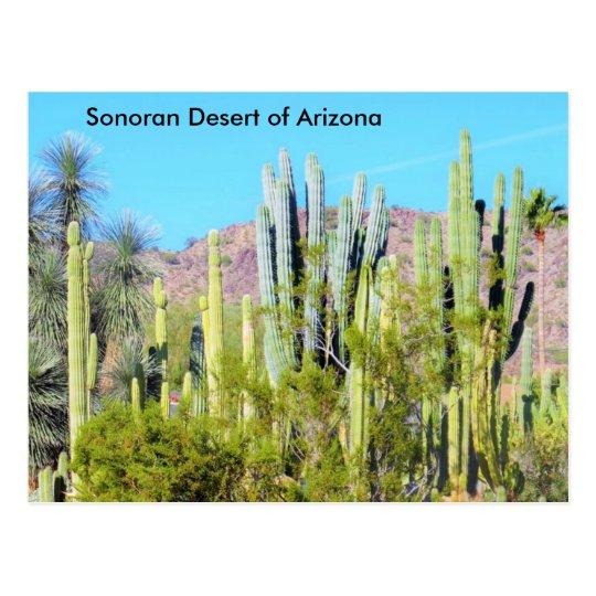 Sonoran Desert of Arizona Postcard